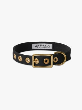 Black & Brass All Weather Dog Collar by Animals In Charge