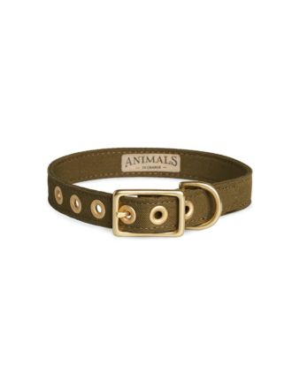 Olive & Brass All Weather Dog Collar by Animals In Charge
