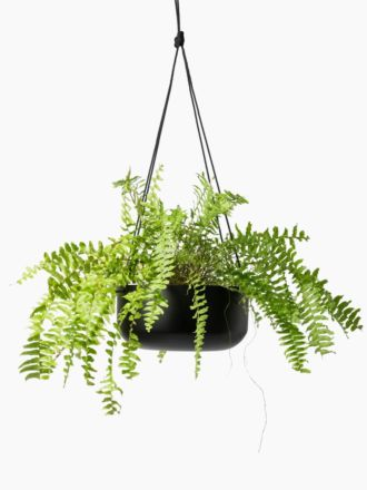 Black Hanging Planter Large by Lightly