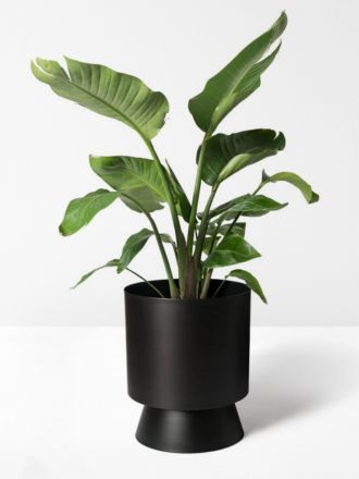 Black Palm Springs Planter Large by Lightly