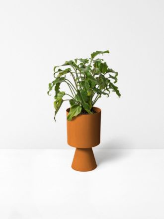 Nutmeg Palm Springs Planter Medium by Lightly