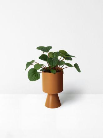 Nutmeg Palm Springs Planter Medium by Lightly