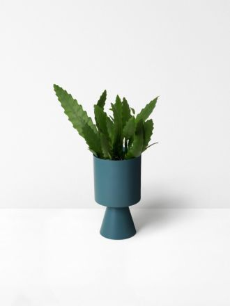 Teal Palm Springs Planter Medium by Lightly
