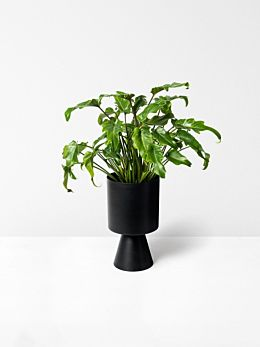 Black Palm Springs Planter Medium by Lightly