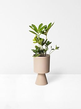Dusty Rose Palm Springs Planter Medium by Lightly