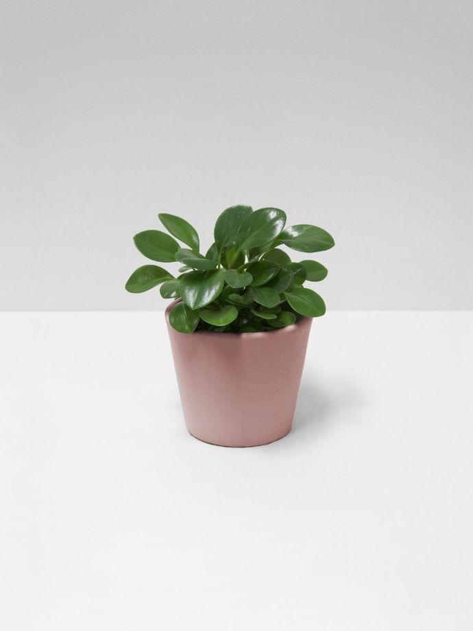 Serax blush pink flower pot small aura home serax flower pot small blush pink mightylinksfo