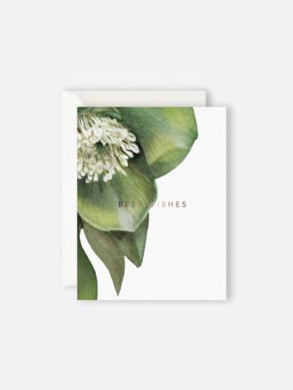 Hellebore Best Wishes by Father Rabbit