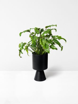 Black Palms Springs Planter Medium by Lightly
