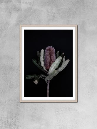 Dark Banksia 1 Photography Print by Love Your Space