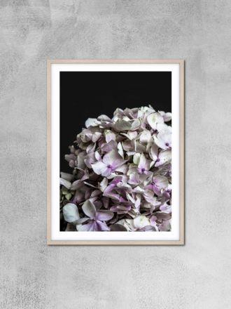 Hydrangea 1 Photography Print by Love Your Space