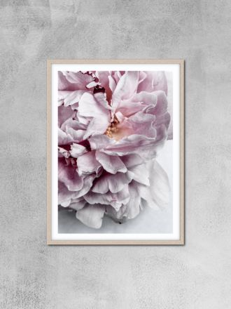 Peony 11 Photography Print by Love Your Space