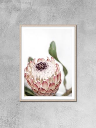 Protea 11 Photography Print by Love Your Space