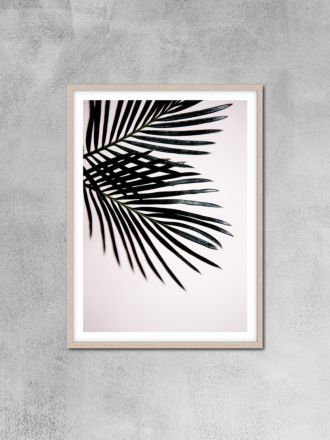 Sago Palm 1 Photography Print by Love Your Space