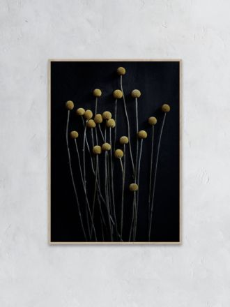 Still Life 01 (Yellow Drumsticks) Photography Print by Pia Winther