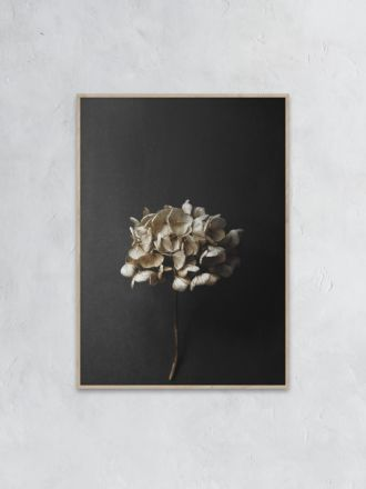 Still Life 04 (Hydrangea) Photography Print by Pia Winther