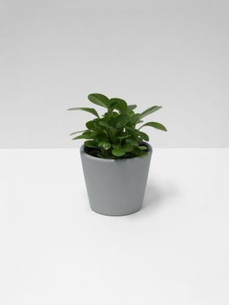 Serax Flower Pot - Small - Grey