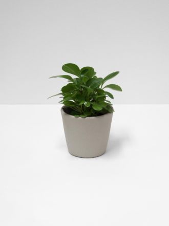 Serax Flower Pot - Small - Mink