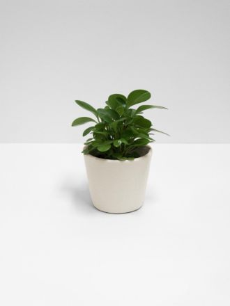 Serax Flower Pot - Small - Stone White
