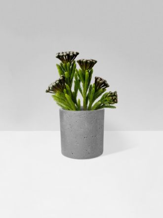 Natural Concrete Planter by Zakkia
