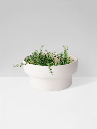 White Flat Podium Planter by Zakkia