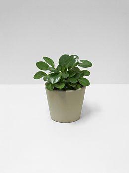 Serax Flower Pot - Small - Khaki