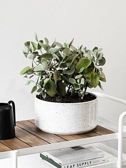 Ash Embers Bowl Planter Large by Zakkia