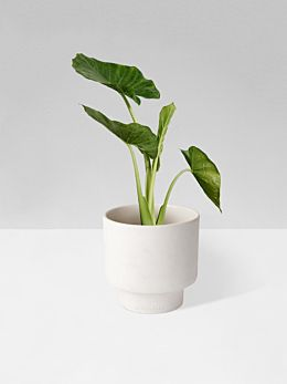 White Podium Planter Medium by Zakkia